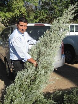 Eduard Marcus loads his tree into the car. Photo: Yoav Devir
