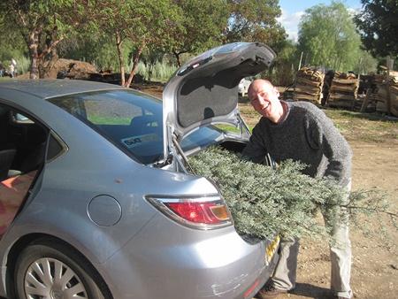 Richard Connor with his tree. Photos: Yoav Devir