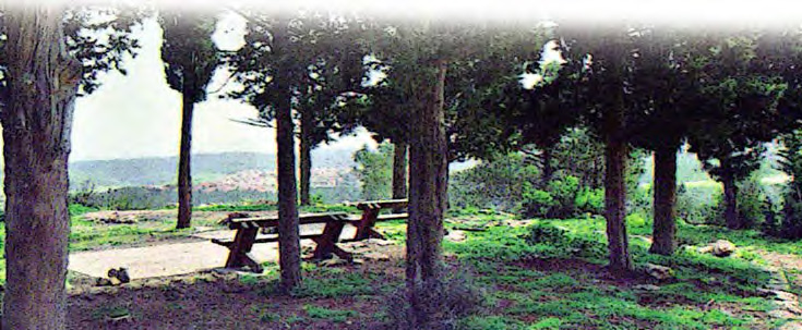 Combining scenery and recreation in Israel's Carmel Forest